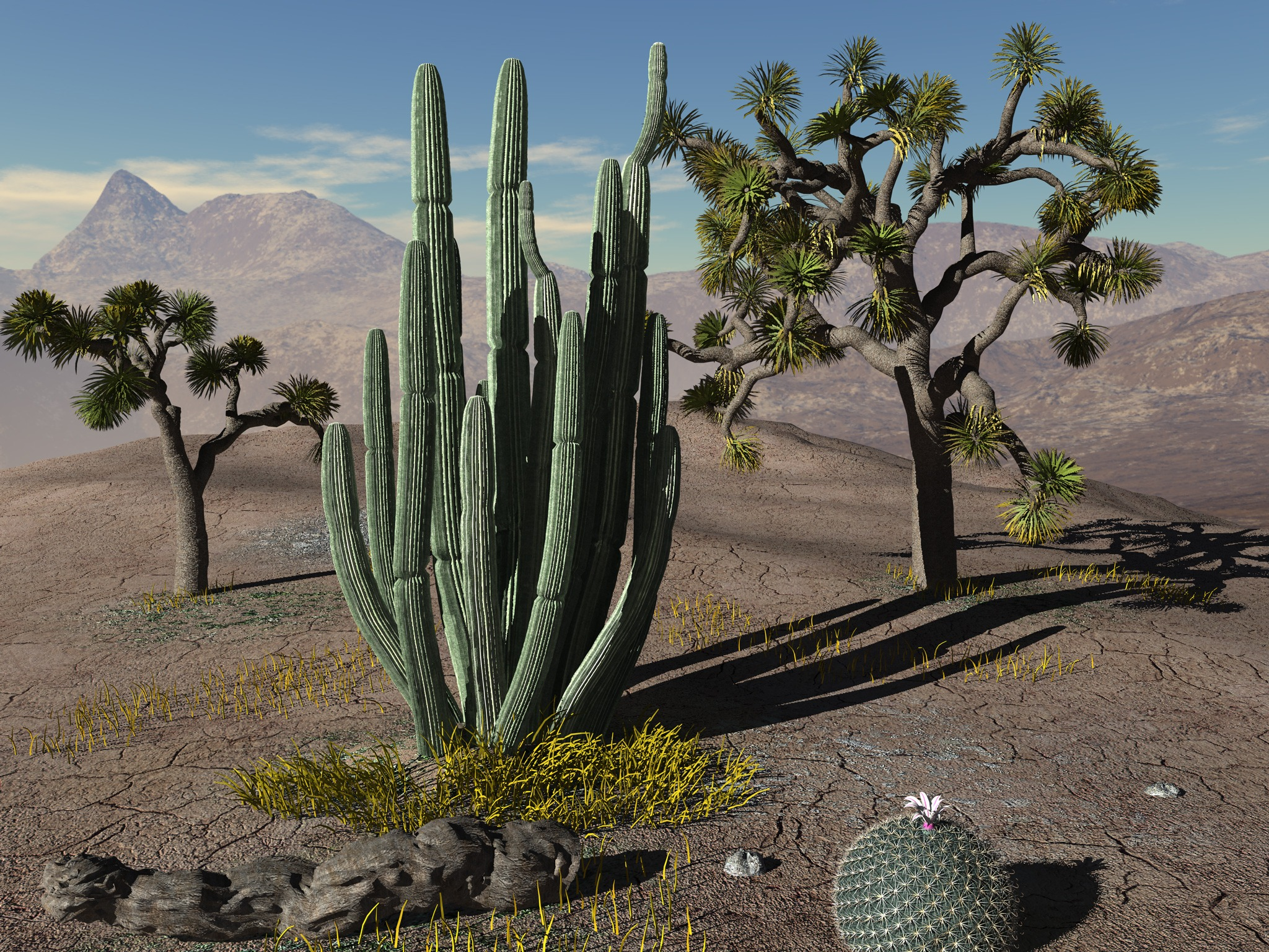 Desert landscapes with cactus the image for Desert landscape