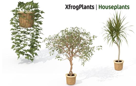XfrogPlants HOUSEPLANTS: Xfrog com