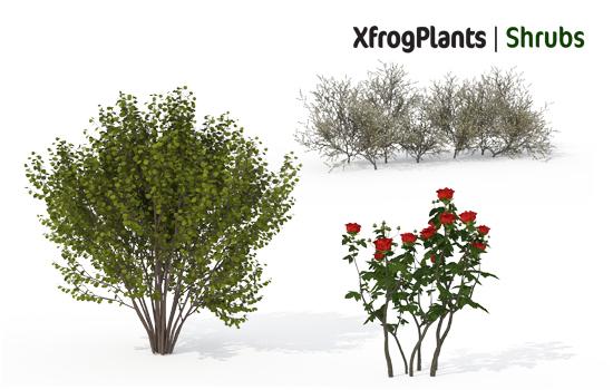 Marvelous XfrogPlants SHRUBS