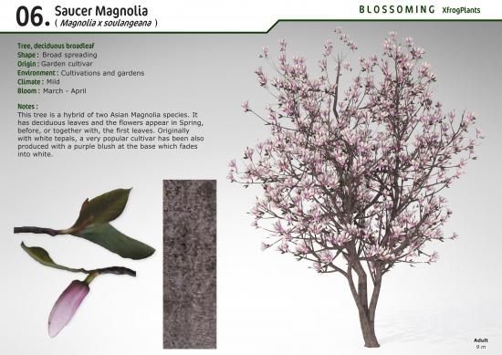 Xfrogplants Saucer Magnolia Xfrogcom