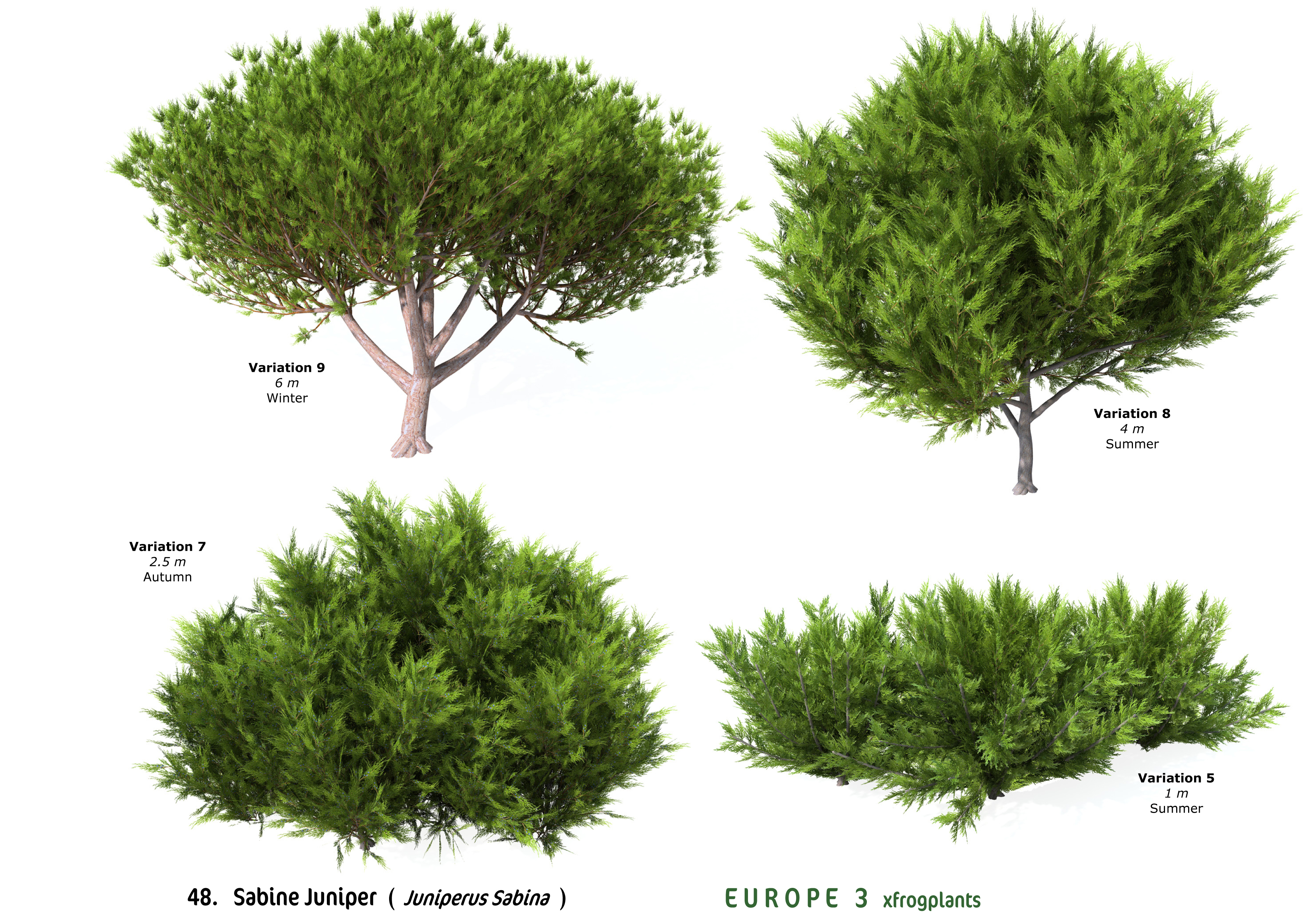 Related keywords suggestions for savin juniper for The juniper