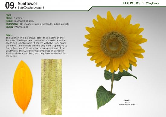 XfrogPlants Sunflower : Xfrog com