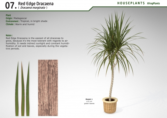 XfrogPlants Red Edge Dracaena : Xfrog.com on red bonsai plant, red fittonia plant, red draceane, red dieffenbachia plant, red zinnia plant, cordyline plant, red pothos plant, red calibrachoa plant, red spathiphyllum plant, red ferns plant, red peperomia plant, red caladium plant, red echeveria plant, red dracaena marginata, red edged dracaena, red aphelandra plant, red clivia plant, red sedum plant, red begonia plant, red sansevieria plant,