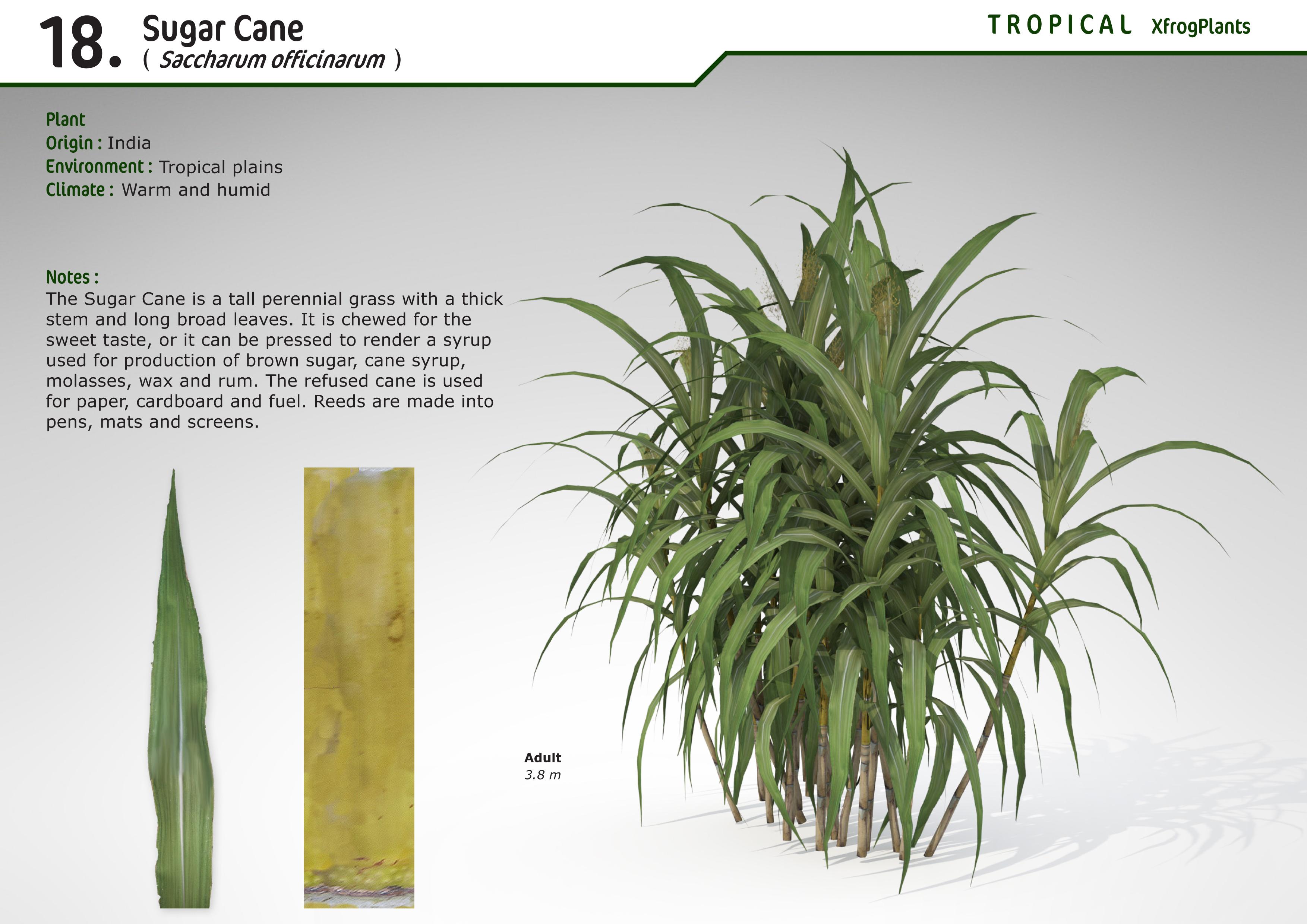 sugar cane 3d model free download
