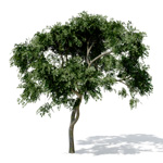 Free 3D Tree and 3D Plant Samples: Xfrog com