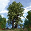 TREE 007a