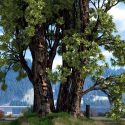 "Image of the Day for 3/4/2015: ""Tree 007a"" by Rudi Hendrich"