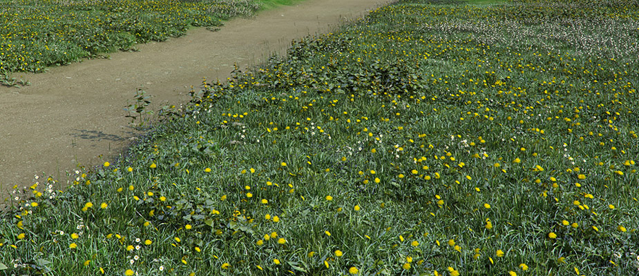 "Image of the Day for 4/1/2015: ""Dandelion Field"" by Art Huma"