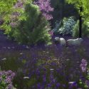 "Image of the Day for 4/9/2015: ""Lavender Meadow"" by Jay Testerman"
