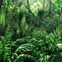 "Image of the Day for 6/16/2016: ""Jurassic Ferns"" by Krzysztof Plonka"