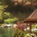 "Image of the Day for 8/4/2016: ""Peaceful Japanese Garden"" by Drea Horvath"