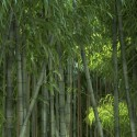 "Image of the Day for 8/30/2015: ""Bamboo Forest"" by Jan Walter Schliep"