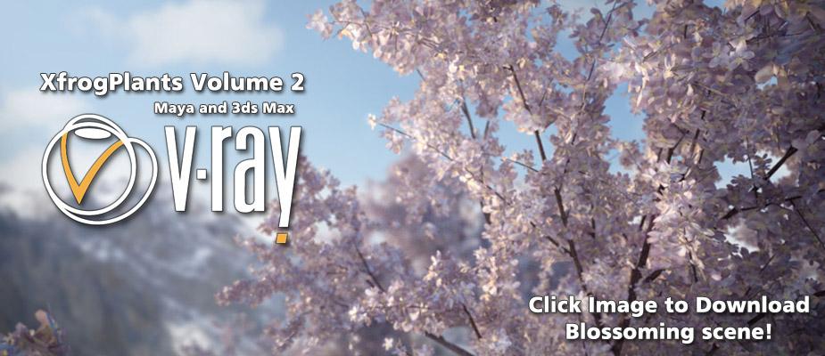 """Spring Blossoms"" - Ashish Dani"
