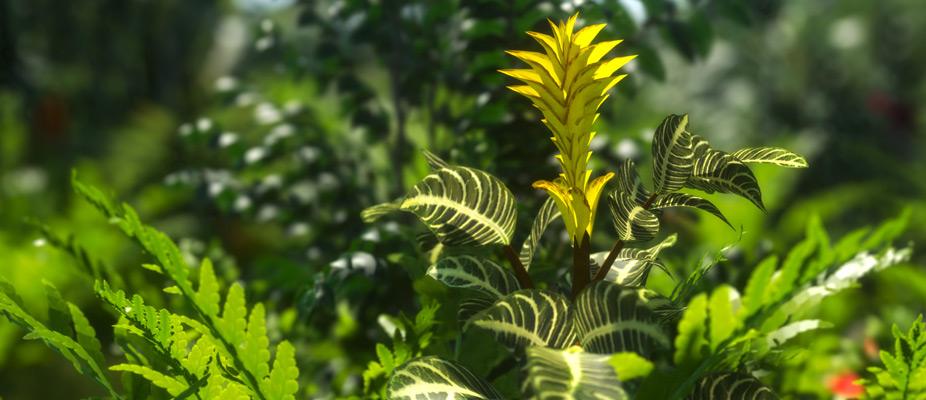 Luc Bianco – Zebra (XfrogPlants Flowers 1)