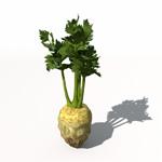 XfrogPlants Celery