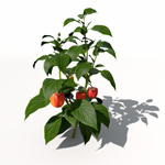 XfrogPlants Chili Pepper